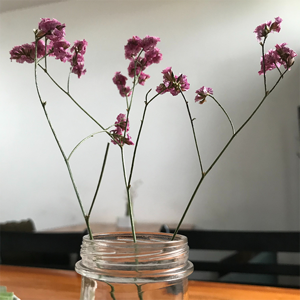 flores y luz